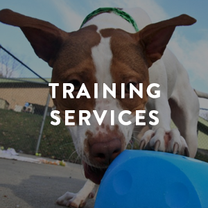 TrainingServices