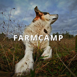 Camp for Dogs on the Farm