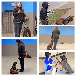 Check out some of our favorite moments from training class!